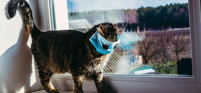 Güney Kore'de ilk kez bir kedi koronavirüse yakalandı