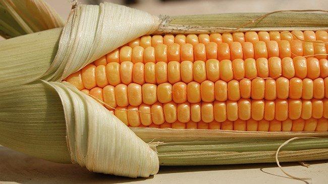 Dolar düşüyor, mısır değer kazanıyor