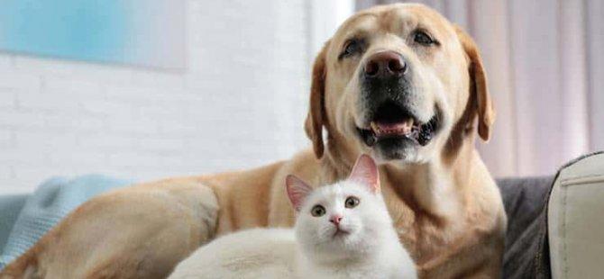 Seul'de belirti görülen kedi ve köpeklere Covid-19 testi yapılacak