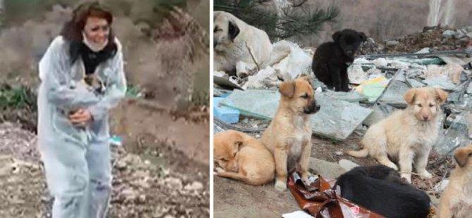 Sokak köpekleri dağlık alanda ölüme terk edildi