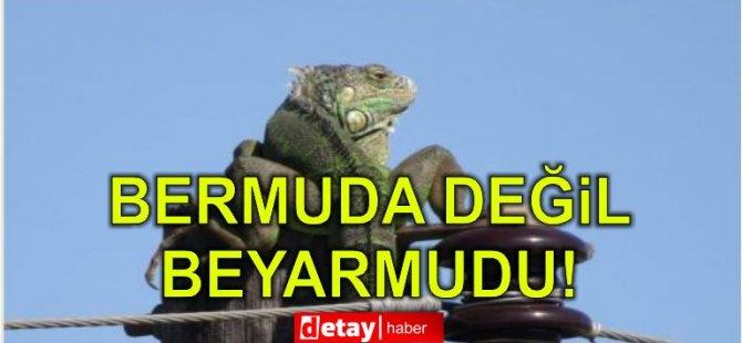 Beyarmudu'nda görülen iguana hem korkuttu hem şaşırttı
