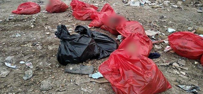 Ankara'da molozların arasında 20 köpek ölü bulundu