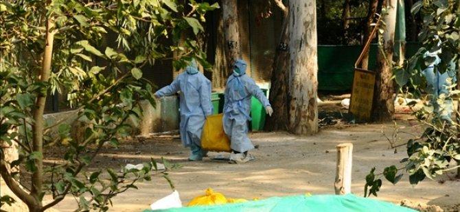 Güney Afrika'daki kuş gribi salgını sonrası 3 ülke alarma geçti