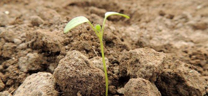 Dünyanın en uzun soluklu deneylerinden biri sonuç verdi: 142 yaşındaki tohum filizlendi