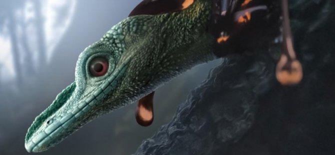 """""""Dünyanın en küçük dinozoru"""" olarak ünlenen 99 milyon yaşındaki fosilin farklı bir örneği bulundu"""