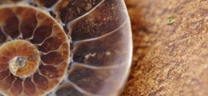 310 milyon yıllık hayvan beyni gün yüzüne çıkarıldı