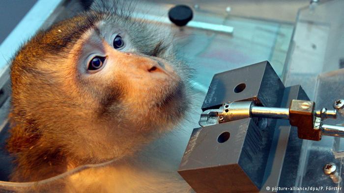 Hayvanlar üzerinde deneyin tamamen yasaklanmasına AB'den ret