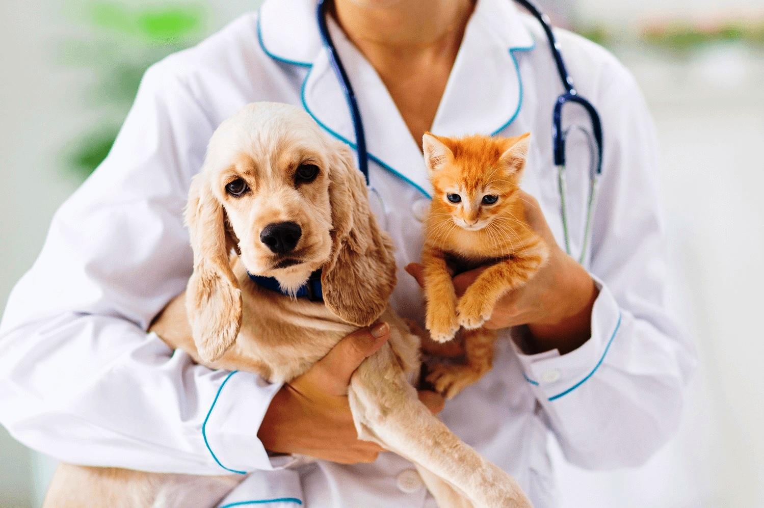 Corona virüs hayvanları da etkiledi: Karma aşıda Covid-19 krizi