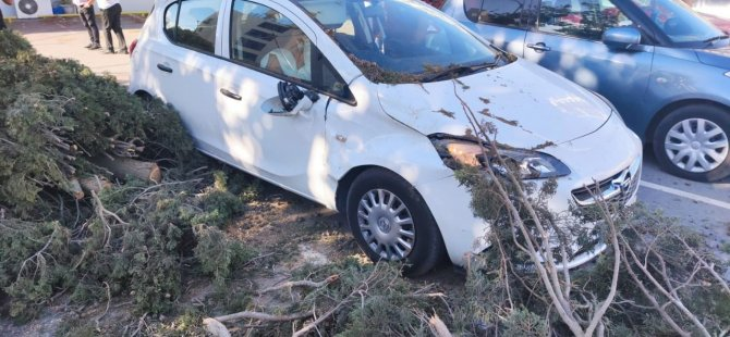 Lefkoşa'daki Şiddetli Fırtına Ağaçları Devirdi