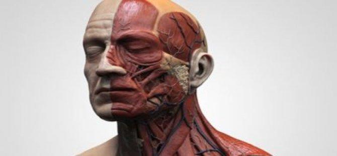 Baş ve boyun kanserlerinde erken tanı hayat kurtarıyor
