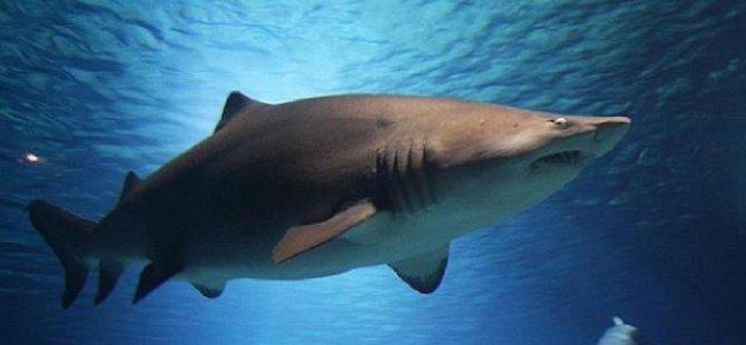 3 bin 493 köpek balığı yüzgecine el konuldu