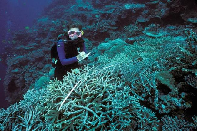 Küresel Isınma yüzünden deniz canlıları tehlikede