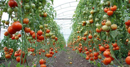 Tarımsal Ürünlerin Kalıntı Analizleri Sürdürülüyor