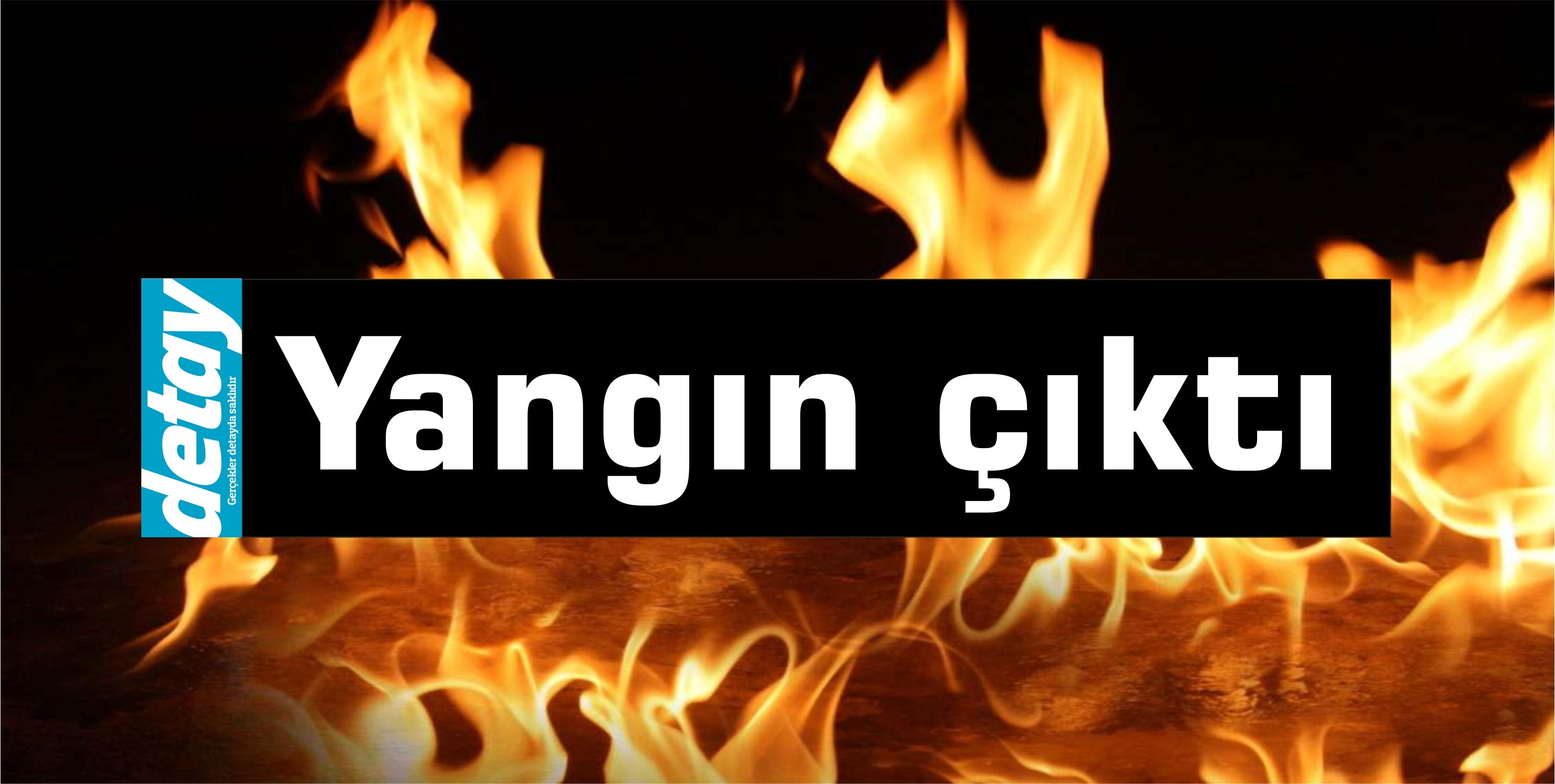 Ergenekon-Tirmen üzerindeki ormanlık alanda yangın çıktı