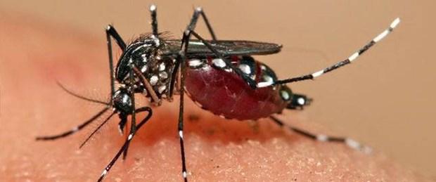 AEDES cinsi sivrisinekle ilgili araştırmalar başlatılmalı