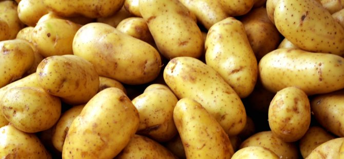 Patatesçilere önemli duyuru
