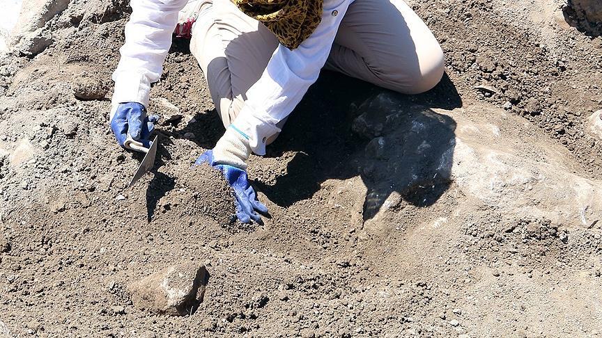 Barcelona'da 230 milyon yıllık sürüngen ayak izi fosili