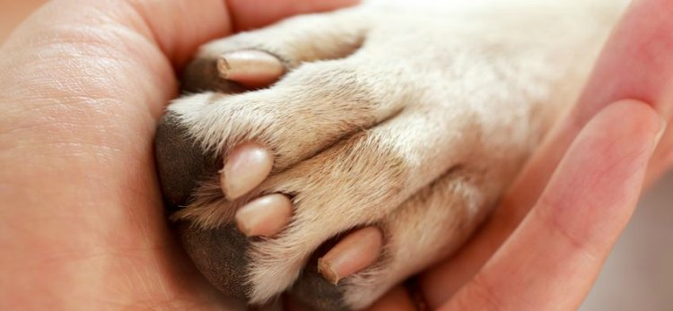 Hayvanseverler köpeği öldüren kişiyi hastanelik etti
