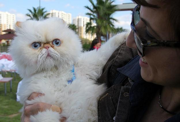 """""""En cazibeli ve yakışıklı"""" kediler yarıştı"""