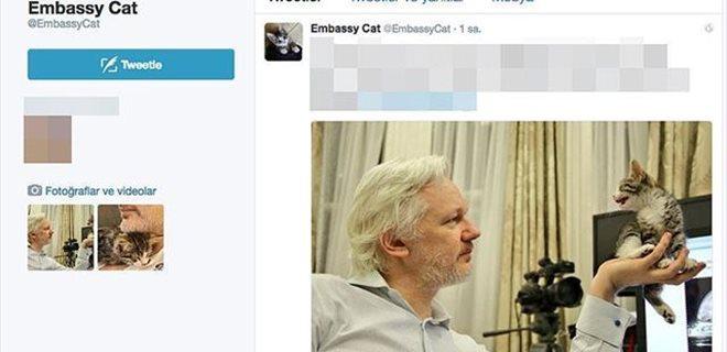 Wikileaks'in kurucusu Assange'a kedi yavrusu hediye edildi