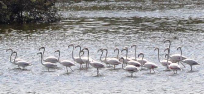 Ayluga Göleti, kent parkı mı oluyor?