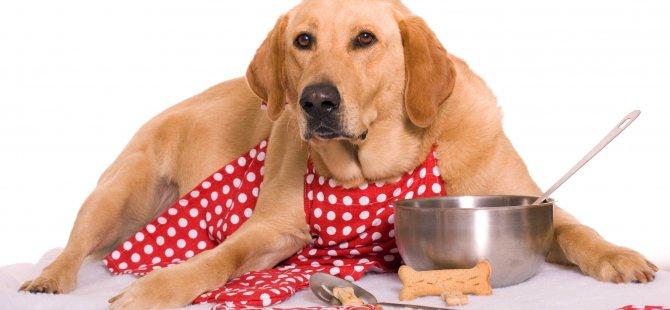 Ünlü sporcu köpek maması yedi, ishal oldu...