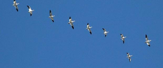 Kuşlar küresel ısınma yüzünden küçülülüyor
