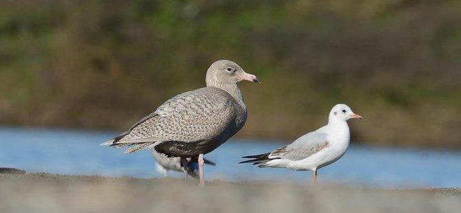 Kuşlar küresel ısınma yüzünden küçülüyor