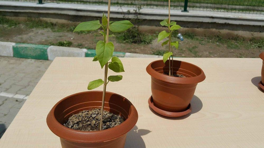 İmam hatipte TÜBİTAK sergisi: Duayla yetiştirilen bitki projesi!