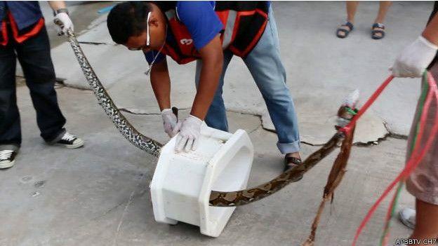 """Tayland'da tuvalette piton saldırısına uğradı: """"Penisimin koptuğunu sandım"""""""