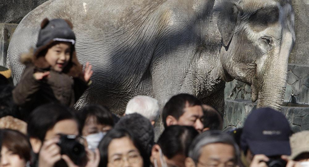 'Dünyanın en yalnız fili' öldü