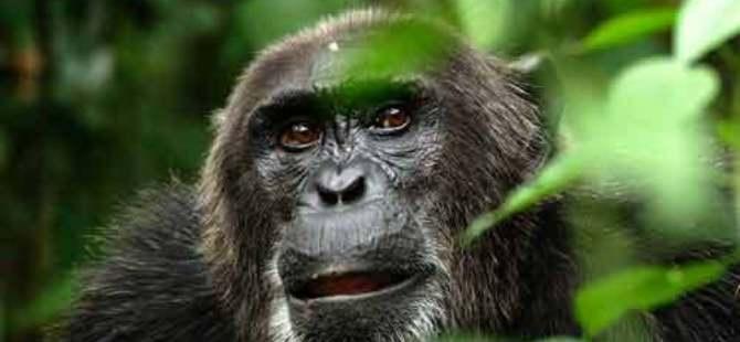 KKTC'ye 'Afrika'nın balta girmemiş ormanları' benzetmesi!