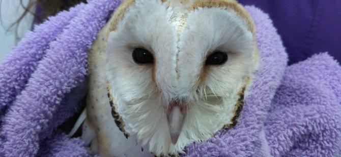 Hasta Baykuş Yakın Doğu Üniversitesi Hayvan Hastanesi'nde Tedavi Edildi
