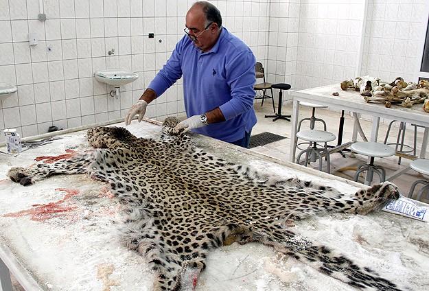 Diyarbakır'da öldürülen leopar sergilenecek
