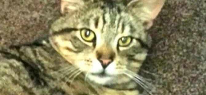Kayıp kedi üç yıl sonra bulundu