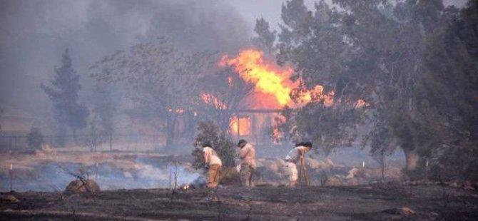 California'da doğa yangını yüzlerce evi yok etti
