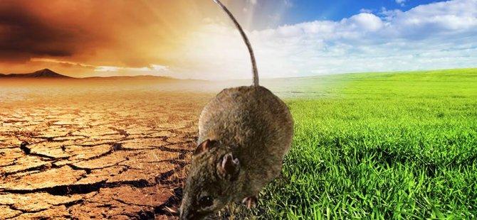 İklim değişikliği bir türü yok etti!