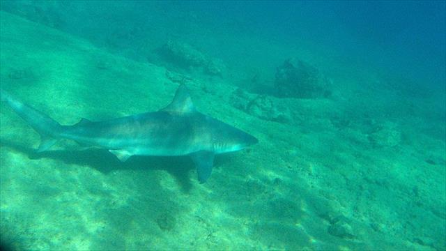 ABD'de 11 yaşındaki çocuk köpek balığı saldırısına uğradı
