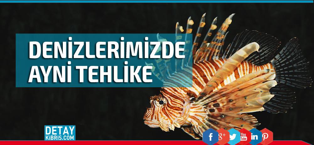 Sahillerimizdeki bu balık ölüme neden oluyor