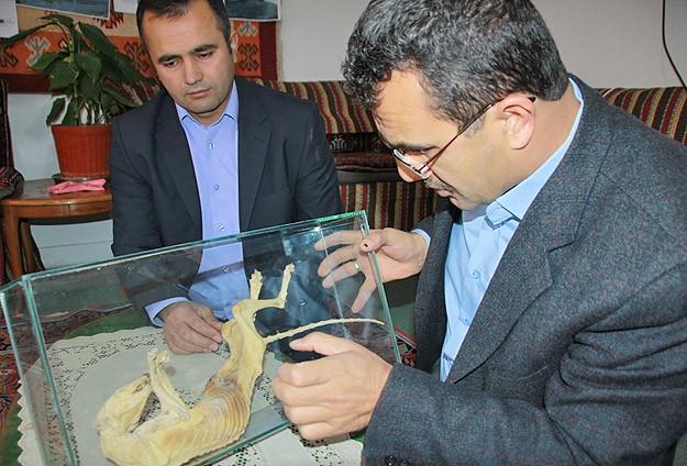 Cami temelinde hayvan fosili bulundu