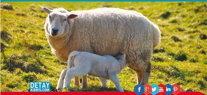 Çiftçi ve hayvancıya bayram müjdesi