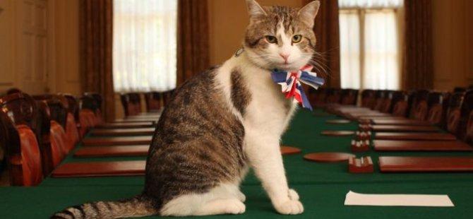 İngiltere'de başbakanlık konutunun kedisi görevde kalacak