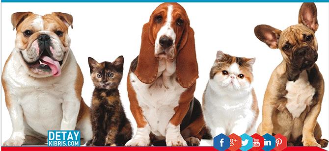 Evcil hayvanlar itlaf edilecek...