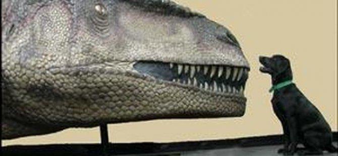 Yeni bir etobur dinozor türü keşfedildi