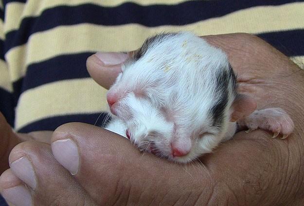 """Hatay'da """"iki yüzlü kedi"""" doğdu"""