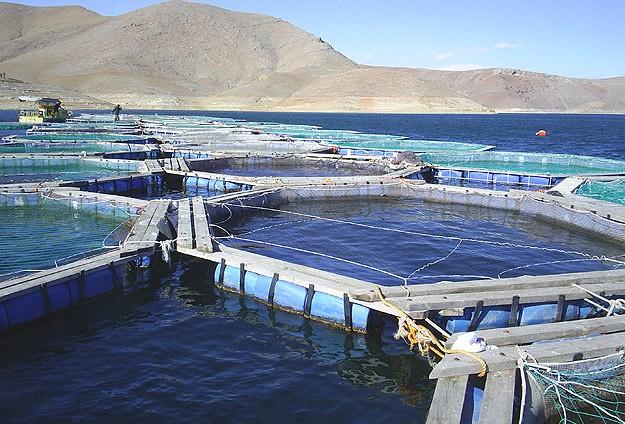 Balık çiftlikleri çevre dostu olacak