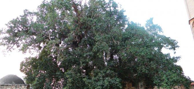 Her Daim Dostlar'dan ağaç bakım etkinliği