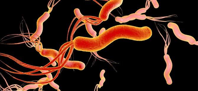 Dünyanın yarısı bu bakteri ile karşı karşıya