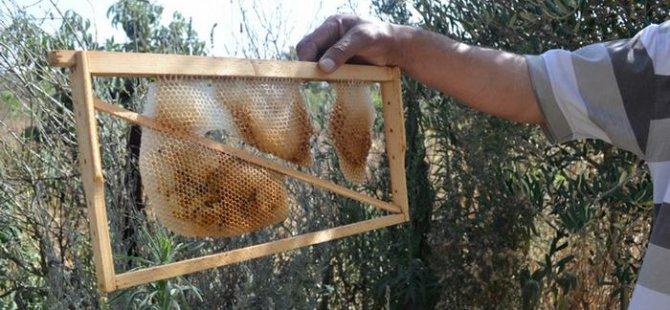 Fas'ta toplu arı ölümlerine karşı savaş