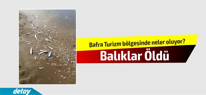 Bafra Turizm bölgesinde neler oluyor?